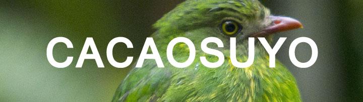 logo_page_cacaosuyo_1