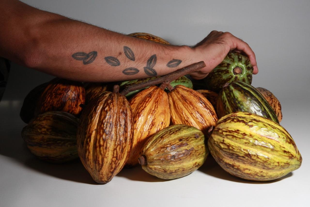 Cabosse cacaosuyo